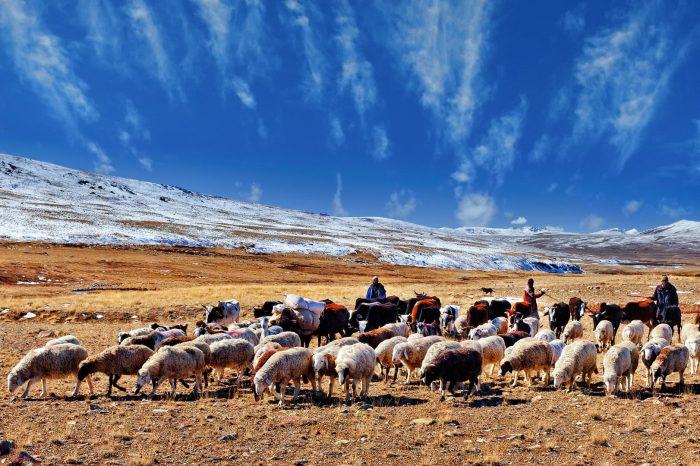 Deosai Plains, Karakoram